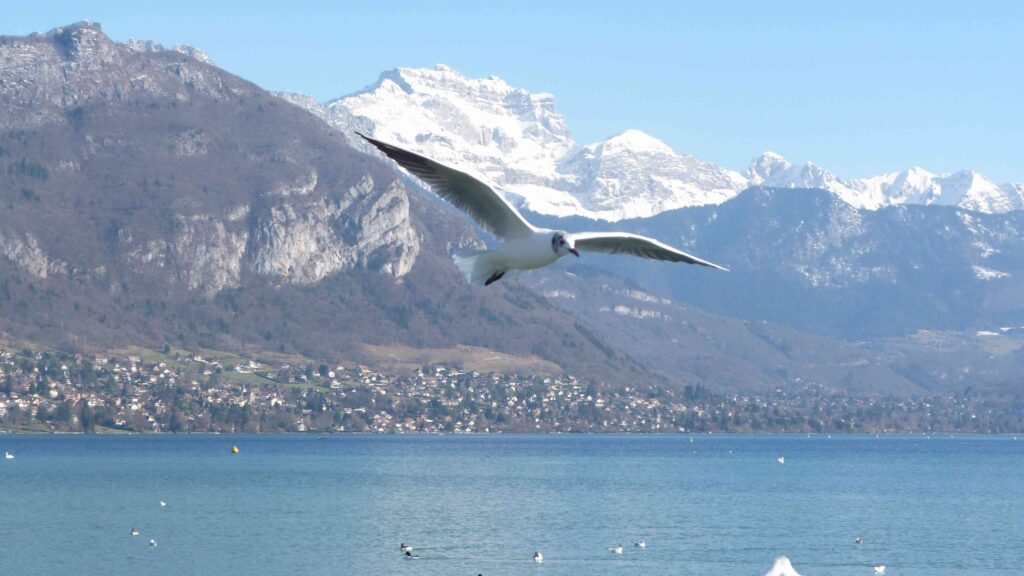L'oiseau et le lac