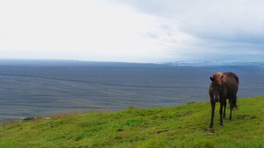 La solitude de Skaftafell