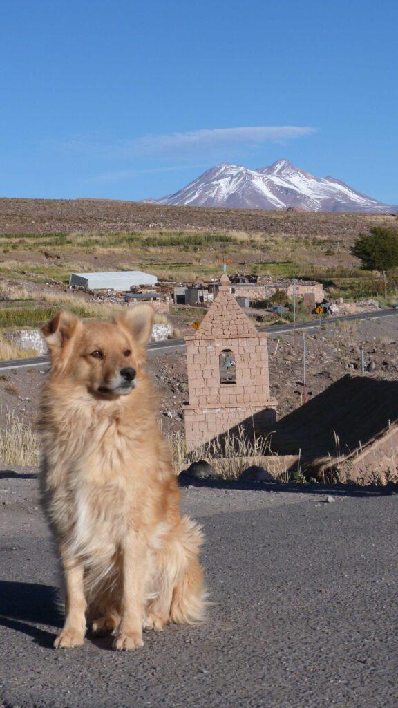 Un chien pose devant l'église de Socaire.