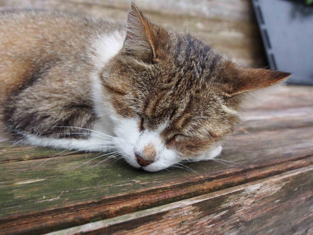 Le chat adore le Lubéron