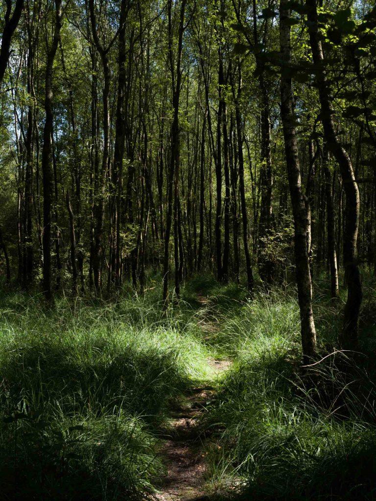 Les forêts du Perche