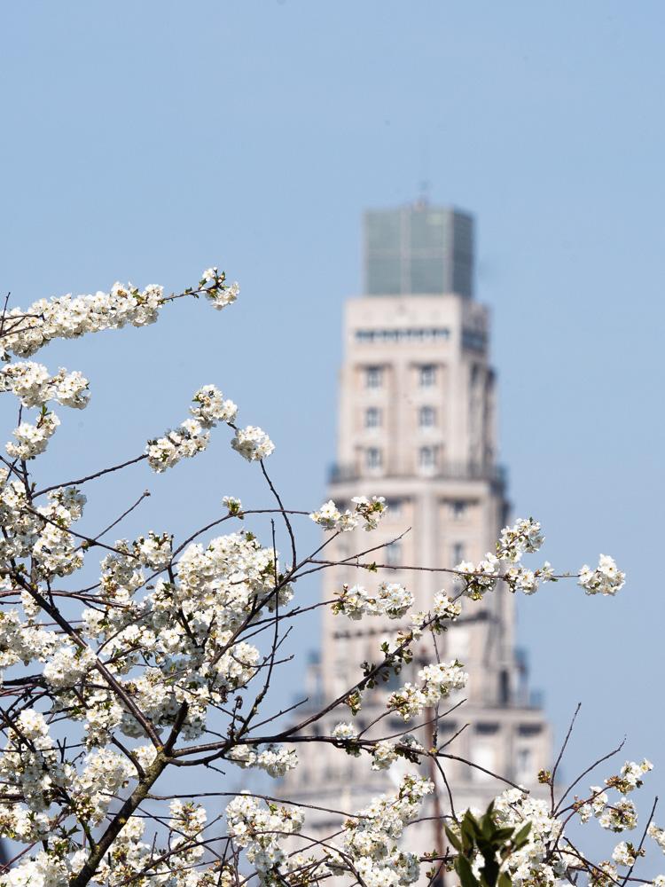 La tour Perret derrière les fleurs