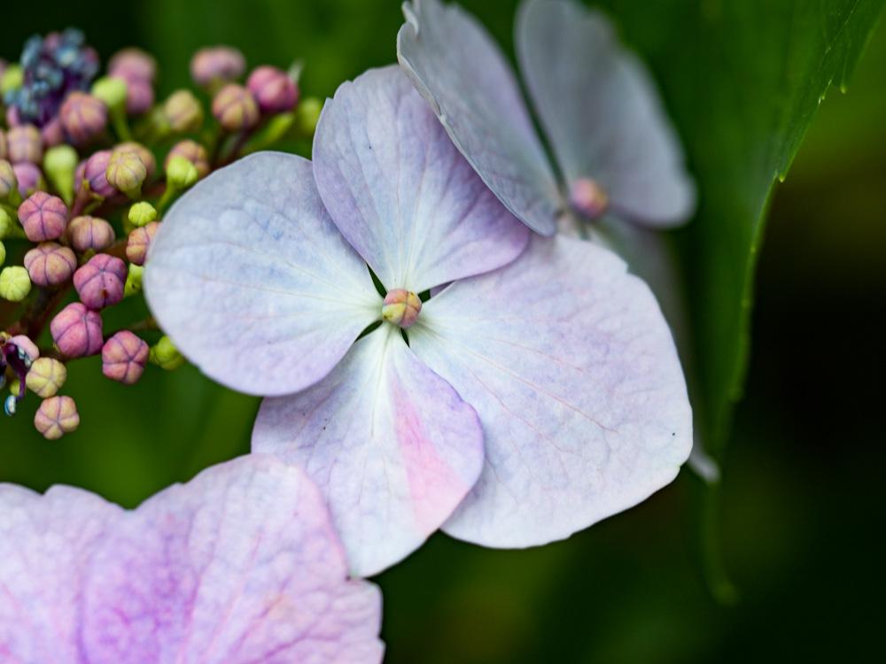 Détail floral au château flore