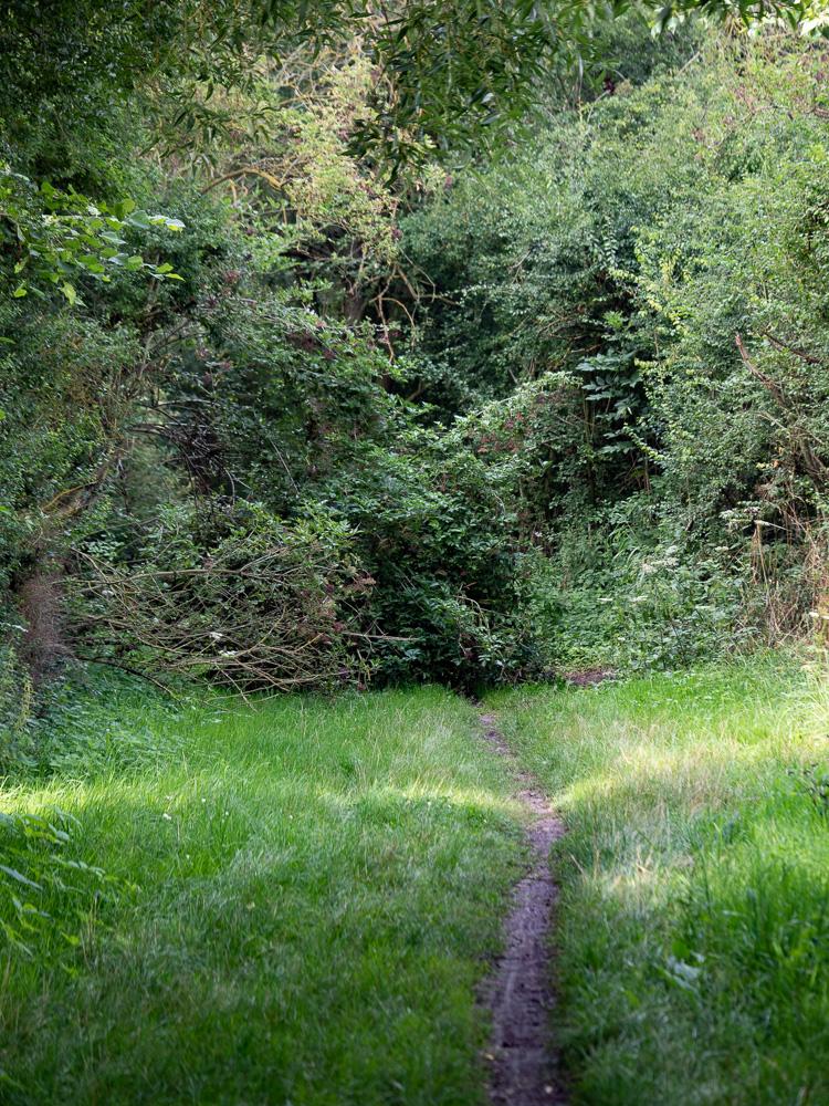 Le long de la coulée verte